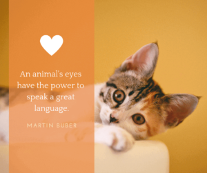 Quotation about pets